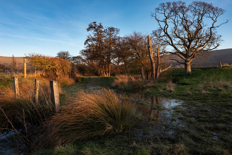 Golden hour sunlight on trees and reeds with country lane by hedgerow under blue sky Mill Lane Poynings UK rural landscape colour photograph ©P. Maton 2019 ©eyeteeth.net