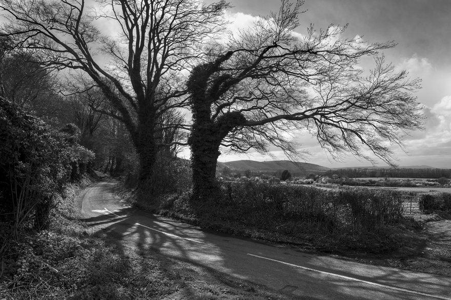 Trees next to Beggar's Lane Newtimber West Sussex with view along south downs to Chanctonbury Ring in distance rural british  black and white landscape documentary photograph © P. Maton 2019 eyeteeth.net