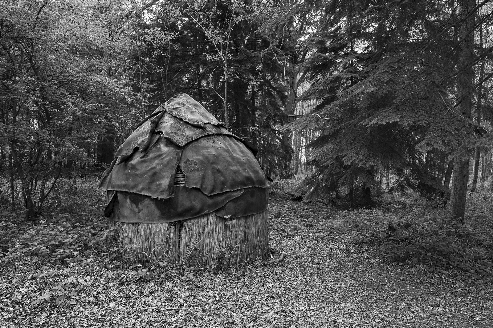 Weathered historic leather roofed reed hut in woodland, black and white portrait rural landscape Glynedbourne Wood East Sussex UK ©P. Maton 2019 eyeteeth.net