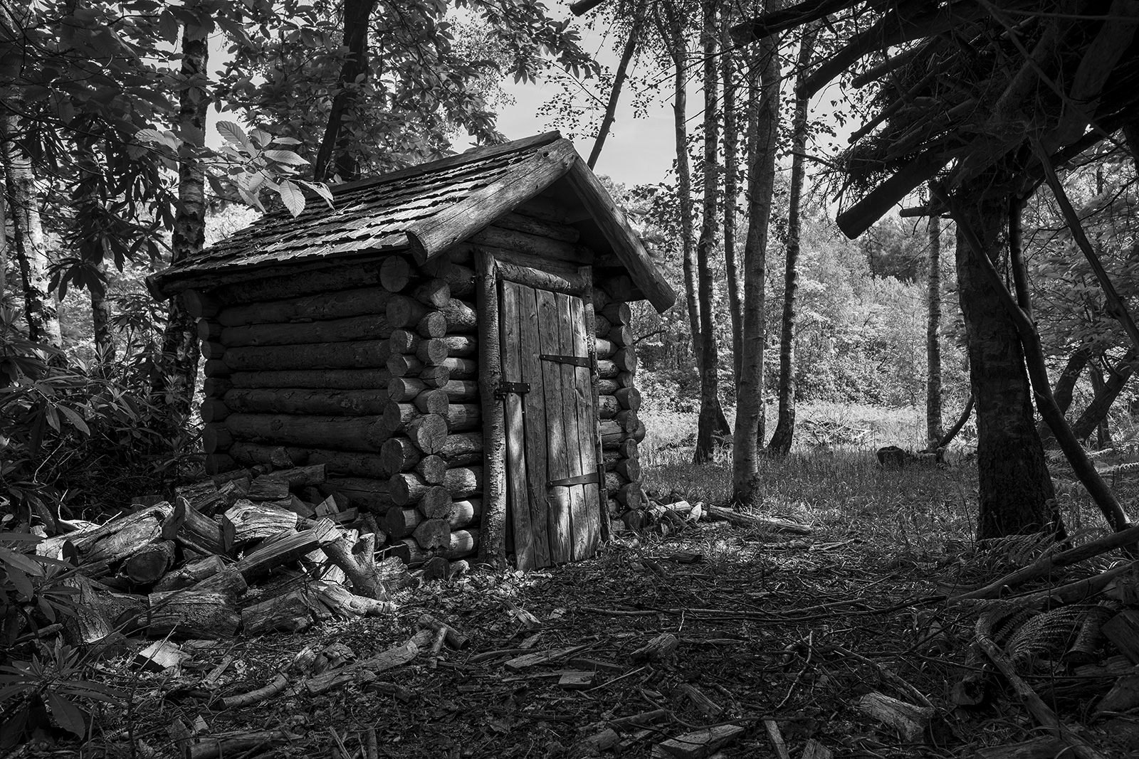 Wooden log built shed cabin inBirch and Chestnut woodland with dappled sunlight, rural arboriculture photograph Ashdown Forest West Sussex UK ©P. Maton 2019 eyeteeth.net