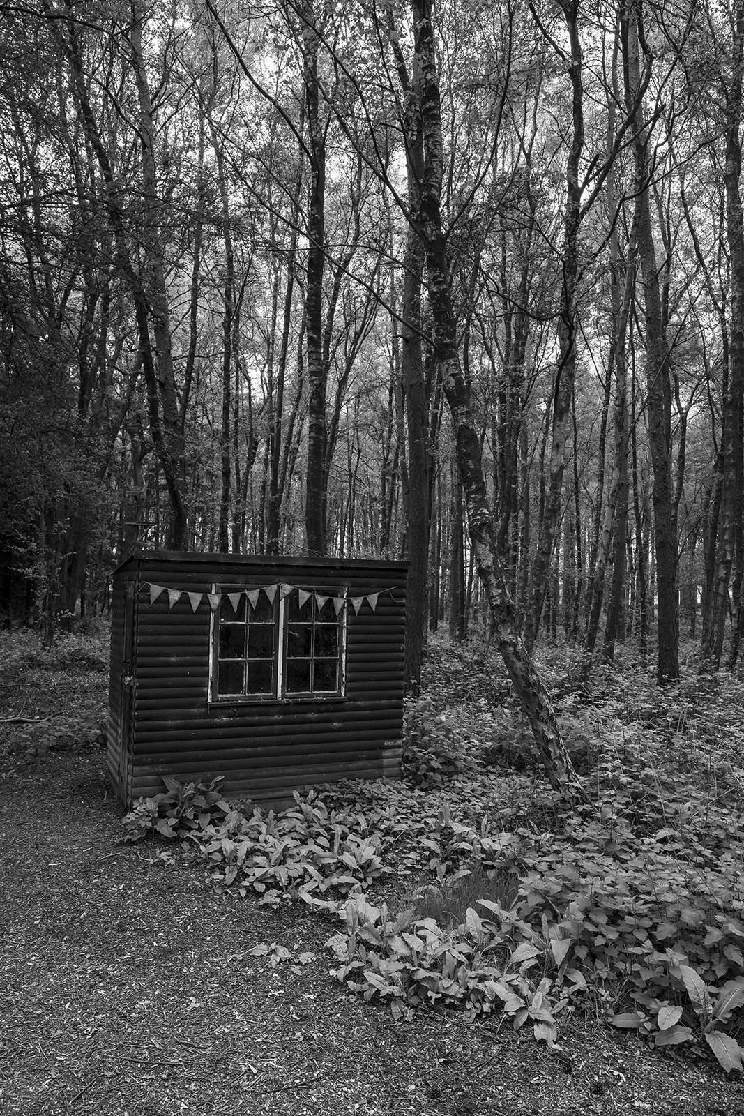 small weathered shed with bunting in woodland, black and white portrait rural landscape Glynedbourne Wood East Sussex UK ©P. Maton 2019 eyeteeth.net