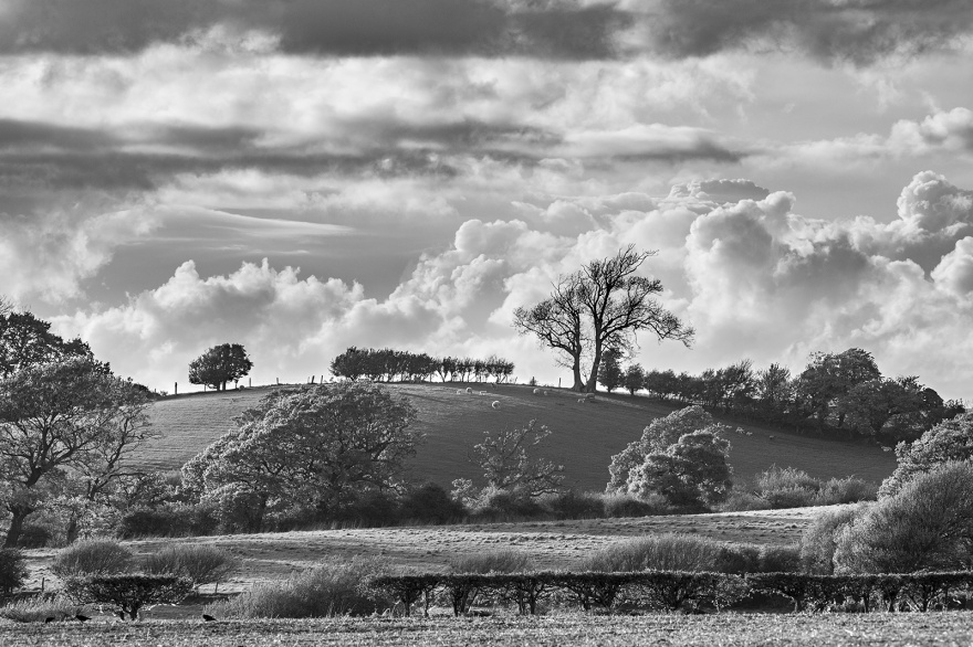 Billowing clouds over rural pasture landscape with trees, hedges and sheep on hill, Mill Lane Poynings West Sussex UK black and white landscape photography south down national park Britain ©P. Maton 2019 eyeteeth.net