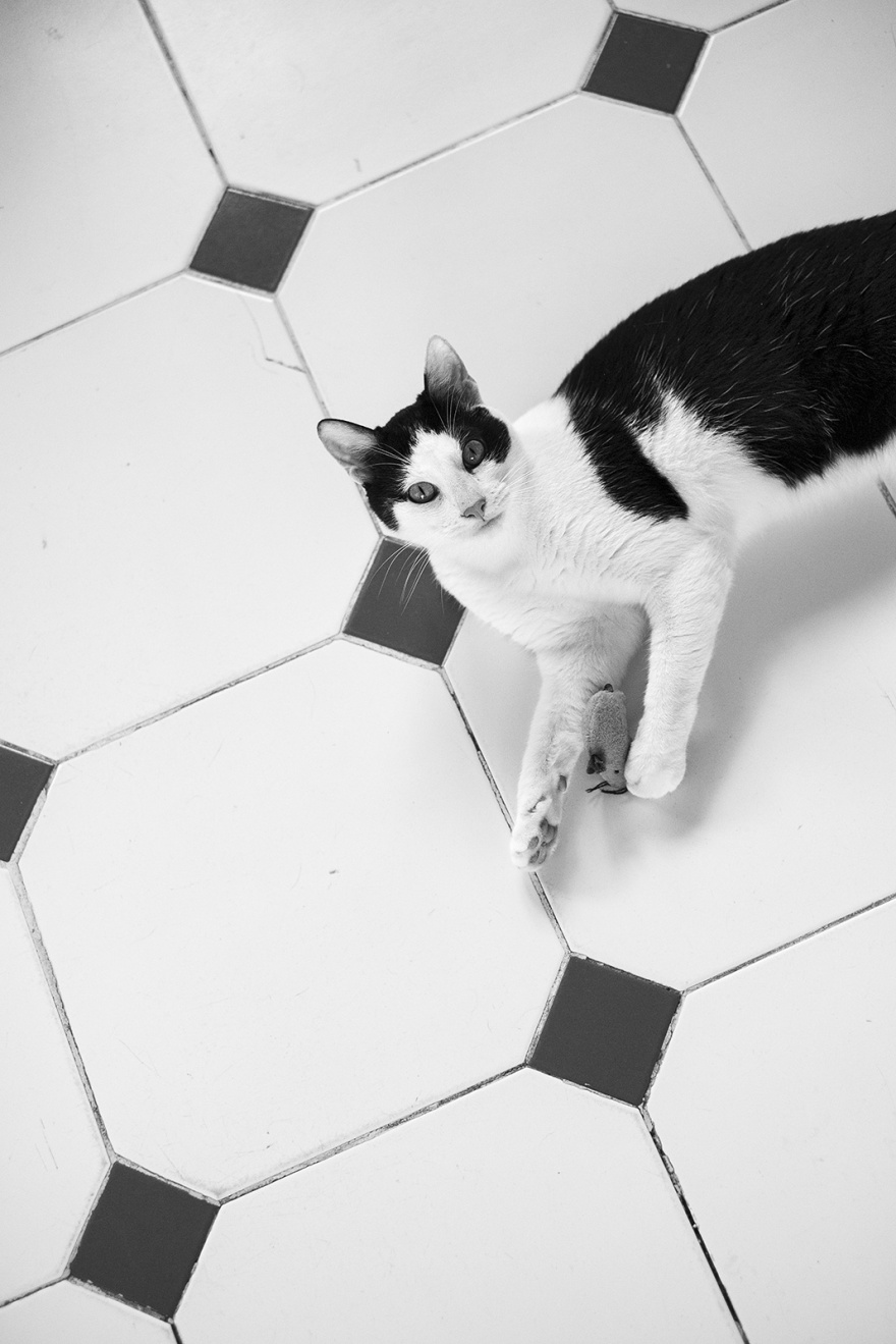Black and white cat on tiled floor with mouse toy looking up at viewer black and white portrait photograph P. Maton 2019 eyeteeth.net