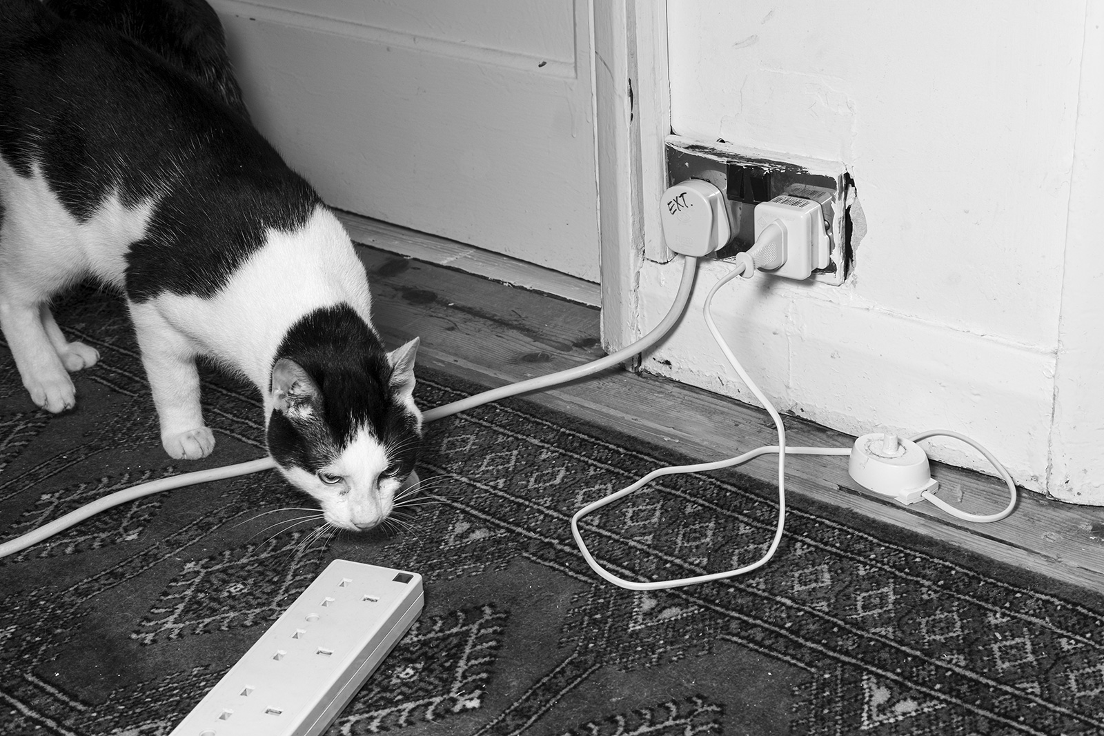 Black and white cat sniffing atmultiplug extension lead on carpeted floor black and white portrait photograph P. Maton 2019 eyeteeth.net
