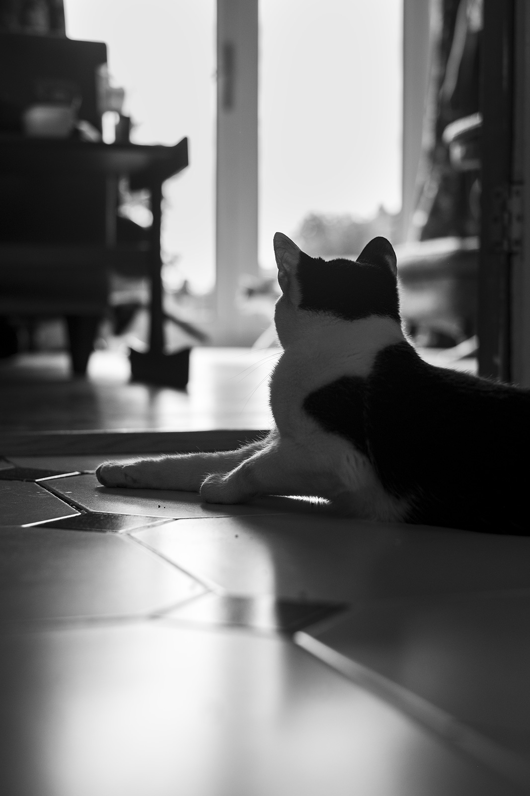 Black and white cat looking away from viewer into light from french windows black and white portrait photograph P. Maton 2019 eyeteeth.net