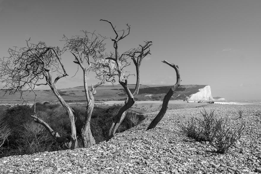 Dead tree on shingle bank with seven sisters cliffs in background Cuckmere Haven East Sussex UK black and white landscape ©P. Maton 2019 eyeteeth.net