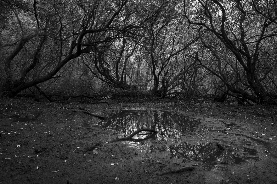 Bog pond under tangled branches Pepper's Pond Spithandle Lane West Sussex UK black and white rural landscape ©P. Maton 2019 eyeteeth.net
