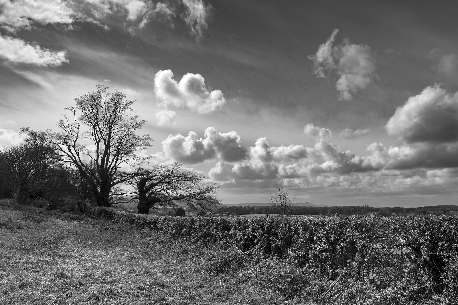 Ancient oak trees by hedge on Beggar's Lane Newtimber West Sussex UK black and white rural landscape ©P. Maton 2019 eyeteeth.net