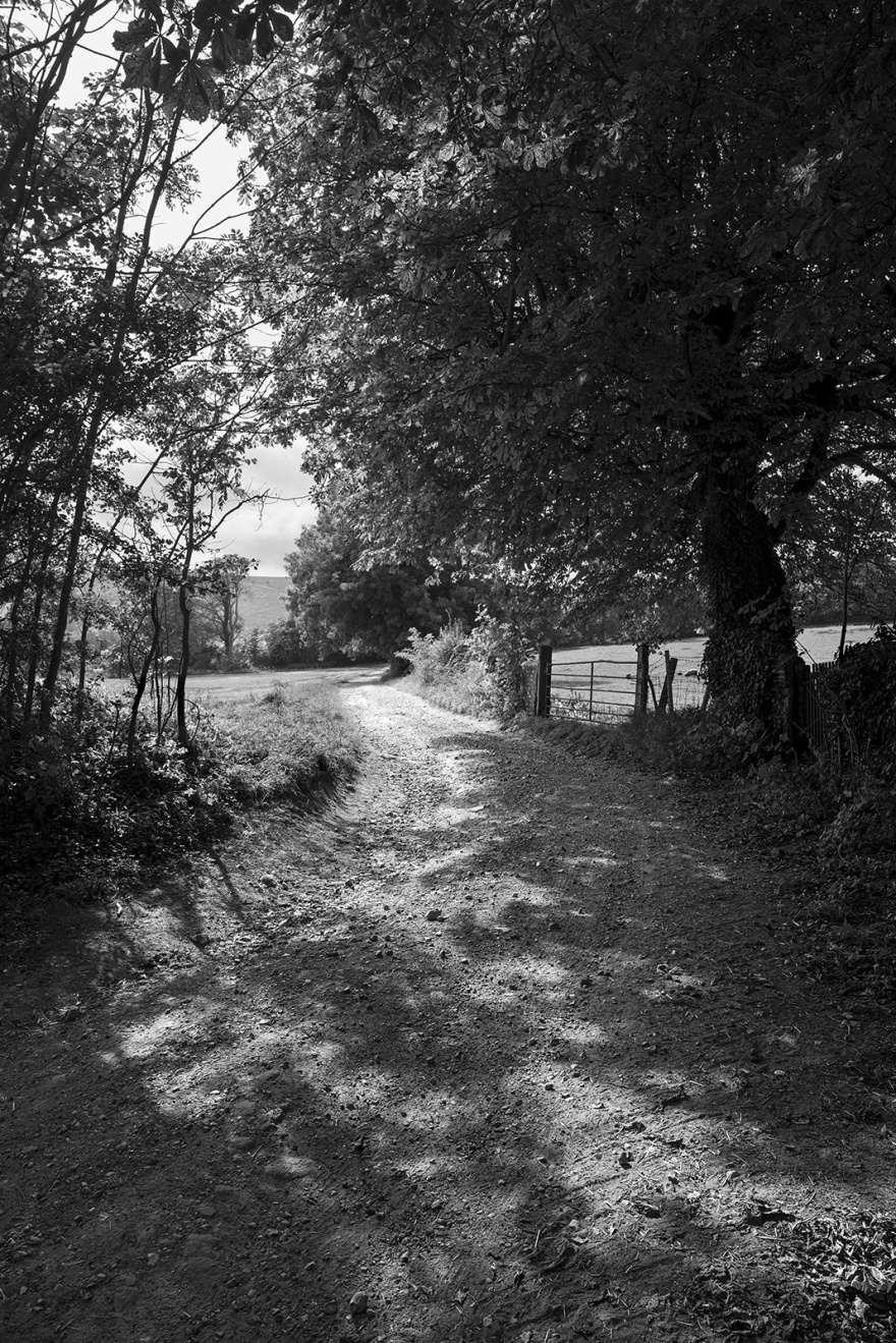Chalky lane track leading along hedgerow with overhanging oak tree Heighton Street Firle Place East Sussex UK black and white rural landscape portrait ©P. Maton 2019 eyeteeth.net