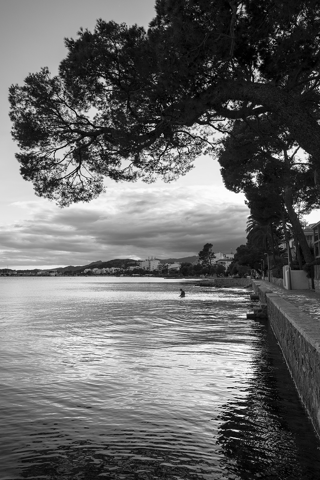 Silhouette of lone figure wading into ocean by seafront under boughs of pine tree Passage de Colom, Port de Pollenca Mallorca Spain black and white landscape portrait ©P. Maton 2019 eyeteeth.net