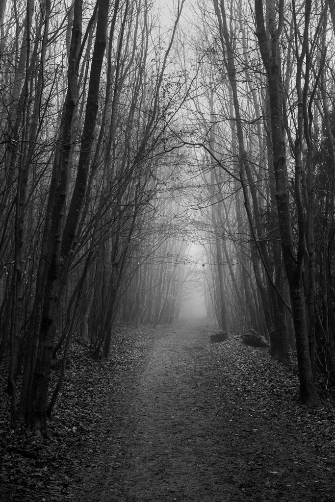 Pathway through coppiced trees with straight trunks on either side receding into fog, black and white rural landscape portrait Upper Lodge Wood Stanmer Park West Sussex UK ©P. Maton 2020 eyeteeth.net