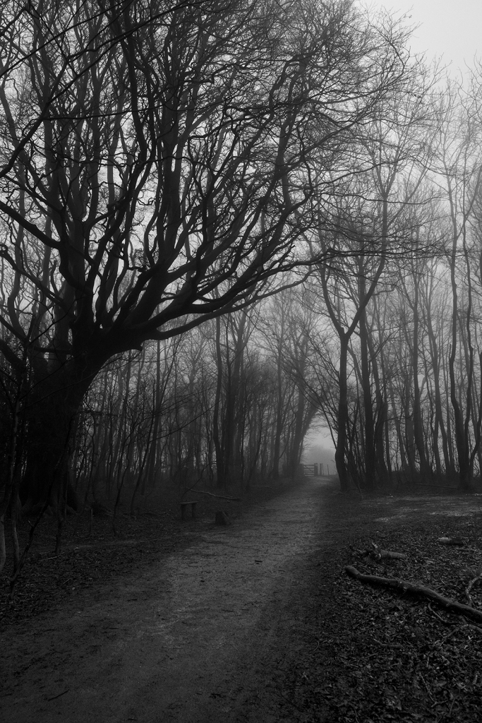 Path leading to gate surrounded by coppiced trees and tall Beech are shrouded in fog, black and white rural landscape portrait Upper Lodge Wood Stanmer Park West Sussex UK ©P. Maton 2020 eyeteeth.net