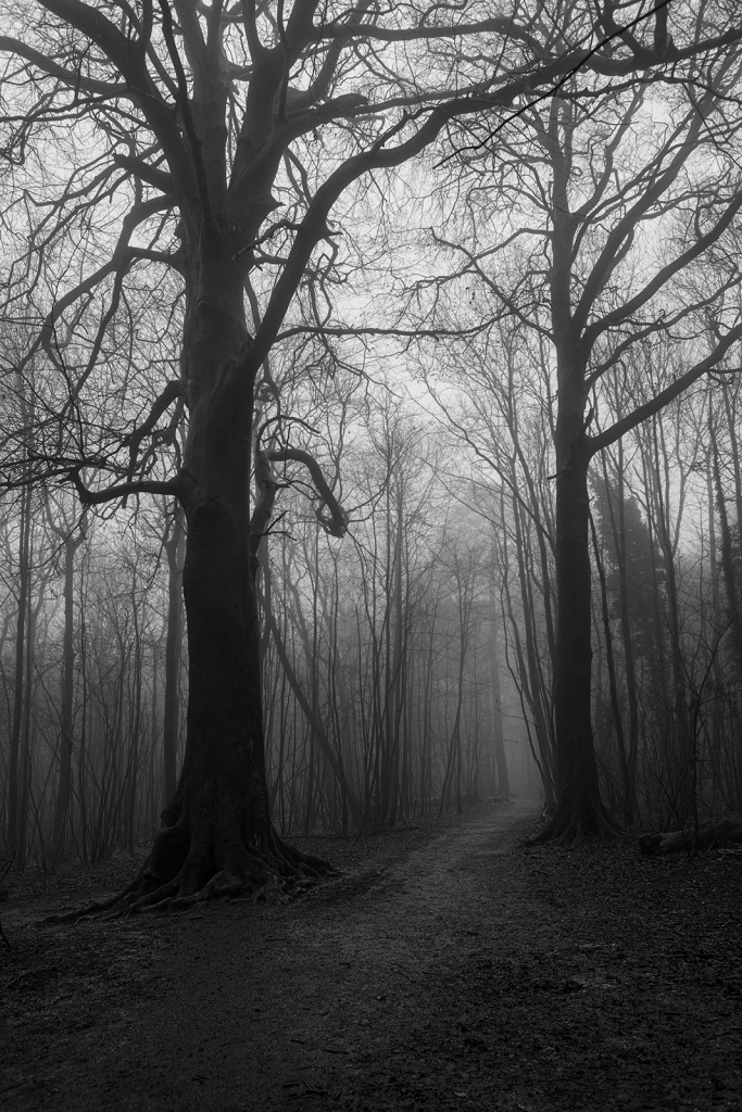 Large Beech trees either side of pathway through coppiced trees shrouded in fog, black and white rural landscape portrait Pudding Bag Stanmer Park West Sussex UK ©P. Maton 2020 eyeteeth.net