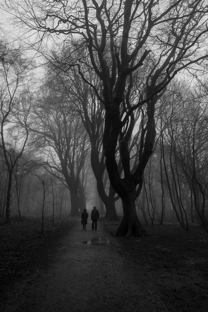 silhouette of two people walking under large Beech trees either side of pathway through coppiced trees shrouded in fog, black and white rural landscape portrait Pudding Bag Stanmer Park West Sussex UK ©P. Maton 2020 eyeteeth.net