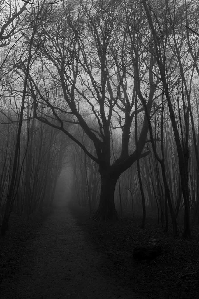Large Beech tree with spreading branches next to pathway through coppiced trees shrouded in fog, black and white rural landscape portrait Pudding Bag Stanmer Park West Sussex UK ©P. Maton 2020 eyeteeth.net