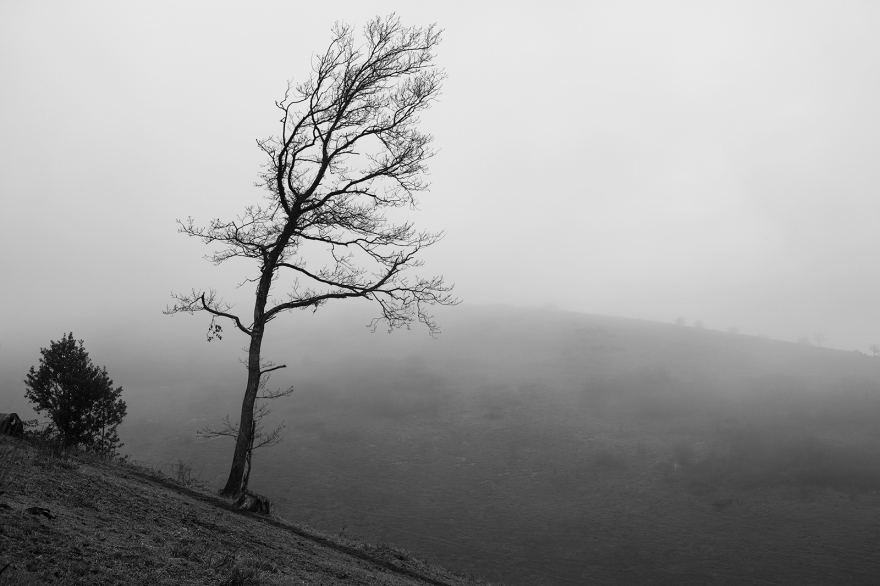 Solitary tree and shrub with fog covered hill in background black and white rural landscape Devil's Dyke West Sussex UK ©P. Maton 2020 eyeteeth.net